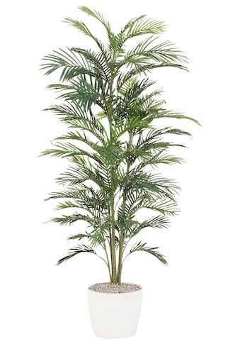Creativ green Kunstpalme »Palme« kaufen