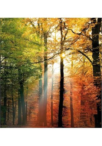 Wall-Art Vliestapete »Goldfarbenener Herbst« kaufen
