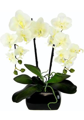 Kunstpflanze (1 Stück) kaufen