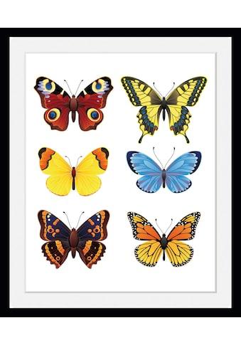 queence Bild »Irina«, Schmetterlinge, (1 St.) kaufen