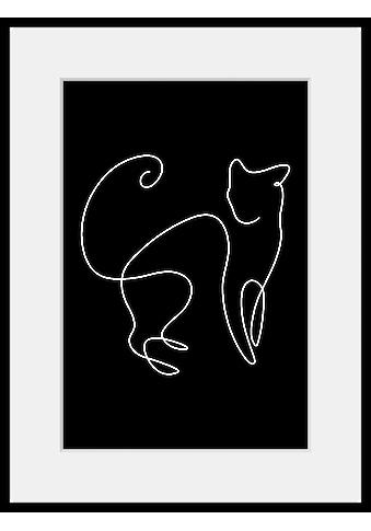 queence Bild »Simba«, Katze, (1 St.) kaufen