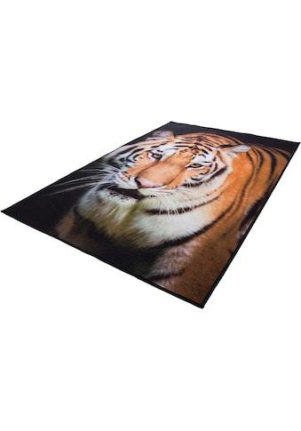 Teppich, »Tiger«, Andiamo, rechteckig, Höhe 4 mm, maschinell getuftet kaufen
