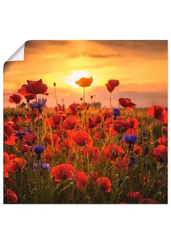Artland Wandbild »Mohnblumen im Abendlicht«, Blumen, (1 St.), in vielen Grössen &... kaufen